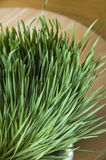 Group of wheatgrass. In pot on table Stock Image