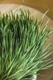 Group of wheatgrass stock image
