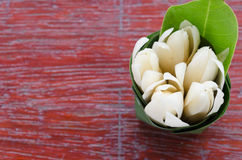 A group of white champaka with green leaf on banana leaf bowl Royalty Free Stock Photo