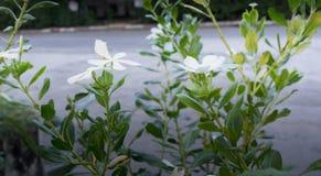 White flower in morning beside road stock images