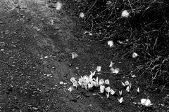 A group of white, flying butterflies on the ground royalty free stock photo