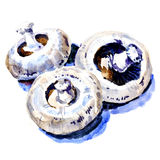 Group of white fresh mushrooms champignon Stock Photography
