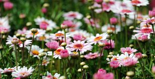 Group of White and Orange Petal Flower Stock Image