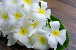 A group of white plumeria flora with green leaf on wooden ground Royalty Free Stock Photography