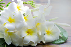 A group of white plumeria flower on wooden background Stock Image