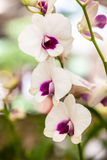 Group of white purple orchid flowers Royalty Free Stock Photo