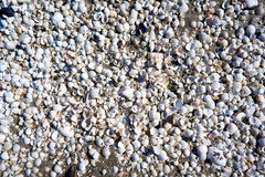 group of white sea shells Royalty Free Stock Image