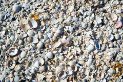 group of white sea shells Stock Photos