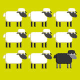 Group Of White Sheep And A Black Sheep vector illustration