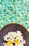 Group of white and yellow frangipani flowers on brown wooden pla. Te by the swimming pool side , vertical composition Stock Photo