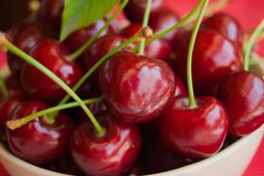 Foreground of bowl full of ripe and red cherries with petioles royalty free stock images