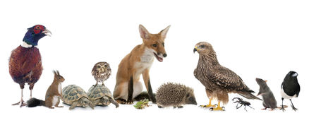 Group of wild animals in Europe Stock Images