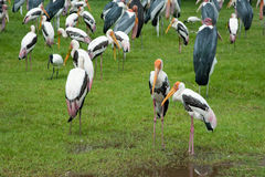 Group of wild birds Royalty Free Stock Image