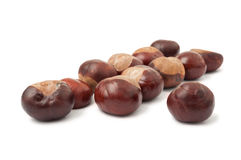 Group of wild chestnuts Stock Image
