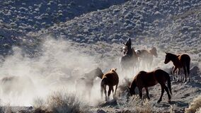 Footage of wild horses fighting and kicking up dust