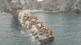 Group wild sea lions sitting on rocky cliff in sea view from drone. Sea lions resting on rocky island and jumping in stock footage