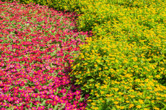 Group wildflower is so beautiful. Group pink and yellow wildflower is so beautiful Royalty Free Stock Photos
