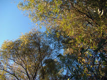 Group of willows in autumn. Fall in November breathe all elements by trees, the colorful leaves, the river, the blue sky stock photo