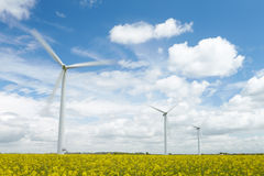 Group Of Wind Turbines In Field Of Oil Seed Royalty Free Stock Photo