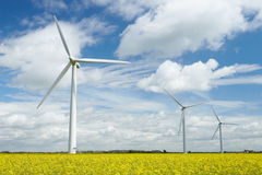 Group Of Wind Turbines In Field Of Oil Seed Rape Stock Photos