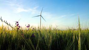 Group of windmills for electric power production in the green field of wheat stock video footage