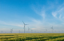 Group of windmills for electric power production in the green field of wheat Royalty Free Stock Photography