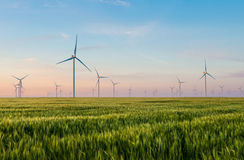 Group of windmills for electric power production in the green field of wheat Royalty Free Stock Image