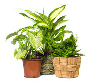 Group of window plant Royalty Free Stock Image