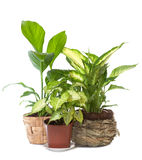 Group of window plant Stock Image