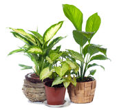 Group of window plant Royalty Free Stock Photography