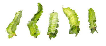 A Group Of Winged Bean Vegetable I Royalty Free Stock Image