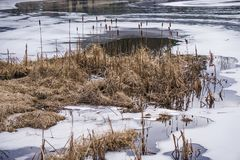 A Group of Winter Cattails by a Frozen Lake - 2. A group of winter cattails by a frozen lake located in the Blue Ridge Mountains of Virginia, USA Royalty Free Stock Photography