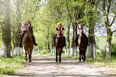 Group of woman horse riders in the forest on sunny day royalty free stock photography