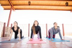 Group of women doing some interesting yoga poses Royalty Free Stock Photo