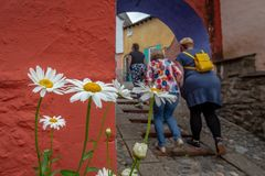 A group of 3 women seen from behind with white and yellow daisies, Portmeirion, North Wales stock image