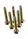 Group wood screw thread Stock Image