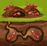 A Group of Working Ants in Hole. Illustration royalty free illustration