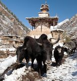 Group of yaks and village in Lower Dolpo Royalty Free Stock Image
