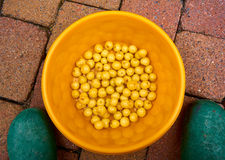 Group of yellow cherries in a yellow bowl Royalty Free Stock Images