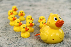 Group of yellow plastic ducks Royalty Free Stock Image