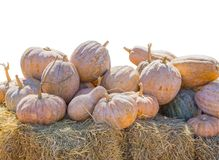 A group of yellow pumpkins on a yellow straw stack with a white background.File contains a clipping path Stock Photos