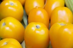 Group of yellow ripe tomatoes closeup Stock Photos