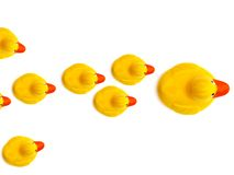 Group a yellow rubber ducks Stock Photos
