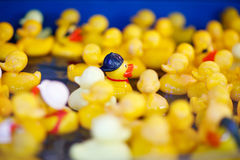 Group of yellow rubber ducks on fair market, for playing games w Royalty Free Stock Image