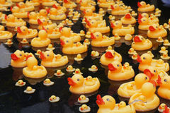 Group of yellow rubber ducks Stock Image