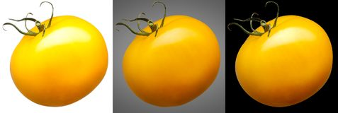 Group of yellow tomatoes isolated on different background Royalty Free Stock Photos