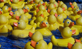 Group yellow toy ducks floating on water Stock Images