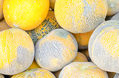 Group of yellow water melons Stock Images