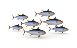 Group of yellowfin tuna Stock Photography