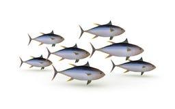 Group of yellowfin tuna Stock Photography
